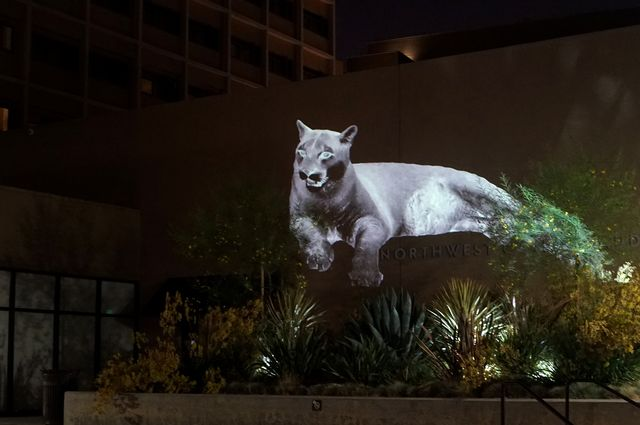 The Animal Land installation uses video projections to generate synthetic animals, native to each geographical location, that are devoid of natural context.